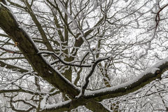 A neve abstrata ramifica textura Fotografia de Stock