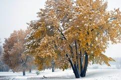 Neve adiantada nas folhas amarelas foto de stock royalty free