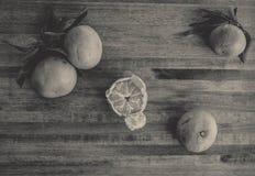 Neve alaranjada brilhante das tangerinas Imagem de Stock Royalty Free