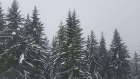 Neve in alberi Austria Immagini Stock Libere da Diritti