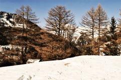 Neve in alpi svizzere Immagine Stock Libera da Diritti