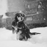 Neve amorosa Fotografia Stock Libera da Diritti