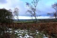 Neve in anticipo Fotografie Stock