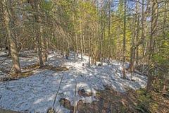 Neve atrasada da mola na floresta foto de stock