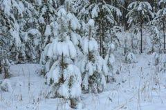 Neve attillata di inverno degli alberi forestali Fotografia Stock Libera da Diritti