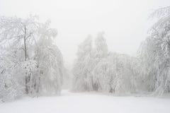 Neve bianca Fotografia Stock