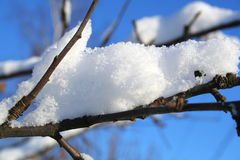 Neve bianca Fotografie Stock