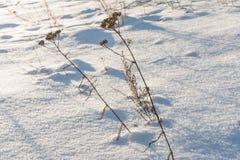 Neve blu Fotografia Stock