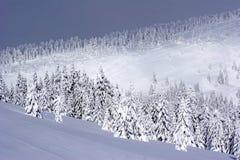 A neve bonita cobriu árvores de pinho Imagem de Stock Royalty Free