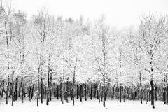 A neve bonita e a geada cobriram árvores imagem de stock royalty free