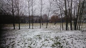 Neve branca e cacho fotos de stock royalty free