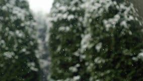 Neve branca que cai durante o dia de inverno Fundo com blizzard dos flocos de neve e natureza borrada do forestSeasonal das madei vídeos de arquivo