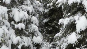 Neve brillante che cade nella foresta magica nelle montagne carpatiche nell'inverno archivi video
