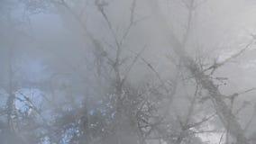 A neve cai do movimento lento da árvore Vista de baixo para cima filme