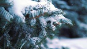 A neve cai lentamente nas árvores no parque do inverno, movimento lento vídeos de arquivo