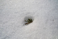 Neve canadese di inverno con le spine fotografie stock libere da diritti