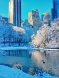 Neve in Central Park New York Immagini Stock