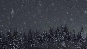 Neve che cade agli abeti nella foresta di inverno stock footage
