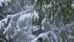 Neve che cade dall'albero di abete, movimento lento video d archivio