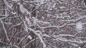 Neve che cade dalle filiali stock footage
