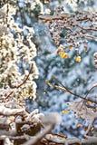 Neve che cade nella foresta immagini stock