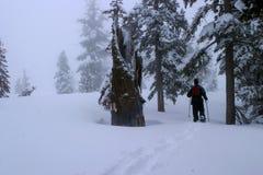 Neve che calza nella sierra montagne di California Immagine Stock