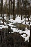 Neve che si fonde nella palude con i tronchi di albero che riflettono nell'acqua immagini stock libere da diritti