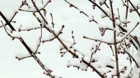Neve che viene a mancare sull'albero video d archivio