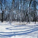A neve chicoteou árvores e sombras Fotos de Stock Royalty Free
