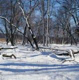 Neve, cielo ed ombre Fotografia Stock Libera da Diritti