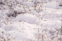 Neve coberta Fotografia de Stock