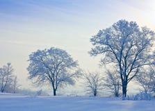 A neve cobriu a árvore Imagem de Stock