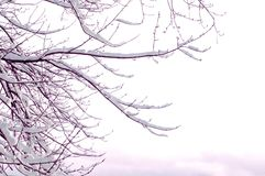 A neve cobriu a árvore Fotografia de Stock