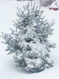 A neve cobriu a árvore Fotografia de Stock Royalty Free