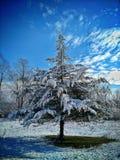 A neve cobriu a árvore Fotos de Stock Royalty Free