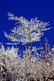 A neve cobriu a árvore do inverno fotografia de stock royalty free