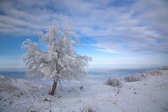 A neve cobriu a árvore no inverno Imagem de Stock Royalty Free