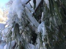 A neve cobriu árvores imagens de stock royalty free