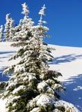 A neve cobriu árvores Fotos de Stock