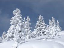 A neve cobriu árvores imagem de stock royalty free
