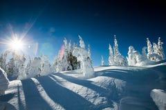 A neve cobriu árvores Foto de Stock