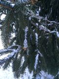 A neve cobriu árvores Imagens de Stock