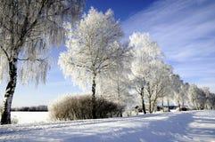 A neve cobriu árvores de vidoeiro imagens de stock royalty free