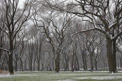 A neve cobriu árvores e gramado em Central Park Fotografia de Stock