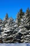 A neve cobriu árvores verdes fotografia de stock