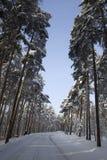 A neve cobriu a avenida foto de stock