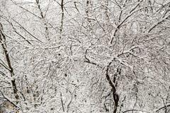 A neve cobriu filiais de árvore Fotos de Stock