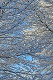 A neve cobriu filiais de ?rvore fotografia de stock royalty free