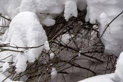 A neve cobriu filiais no inverno Fotografia de Stock Royalty Free