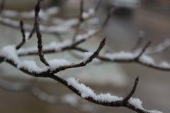 A neve cobriu a filial Fotos de Stock